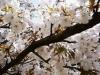 spring-2010-3