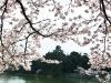 spring-2010-8