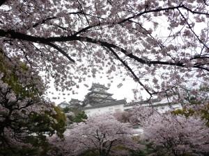 Himeji full blossom
