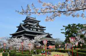 Matsue castle and sakura